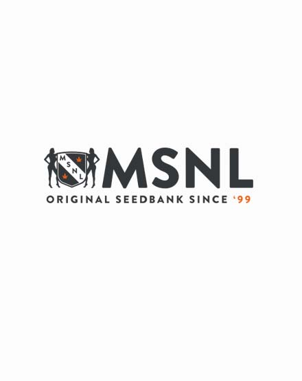 Bruce Banner Fast Flowering Marijuana Seeds